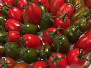 I pomodorini di Torpedino