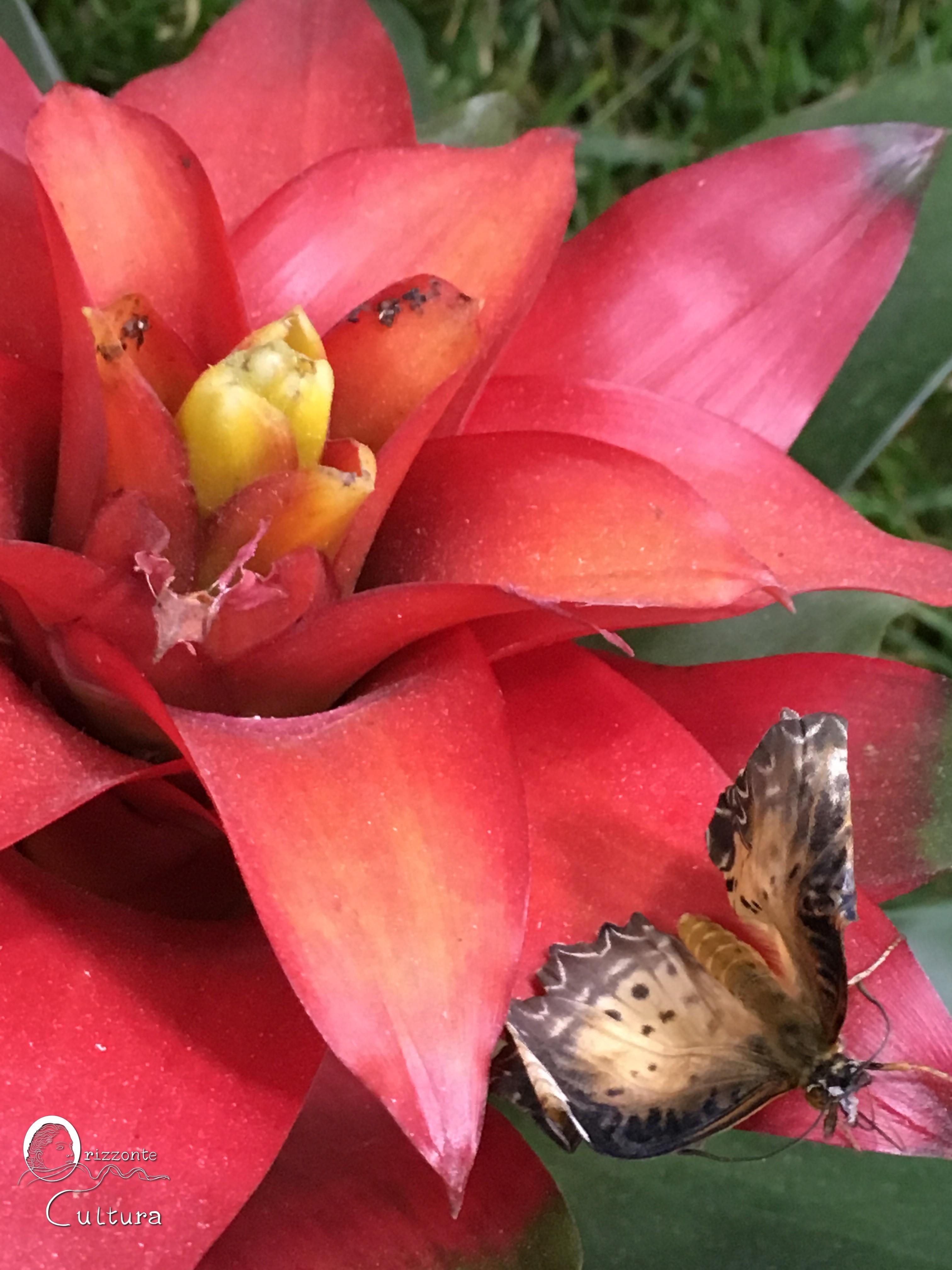 Un tè con le farfalle - Orizzonte Cultura