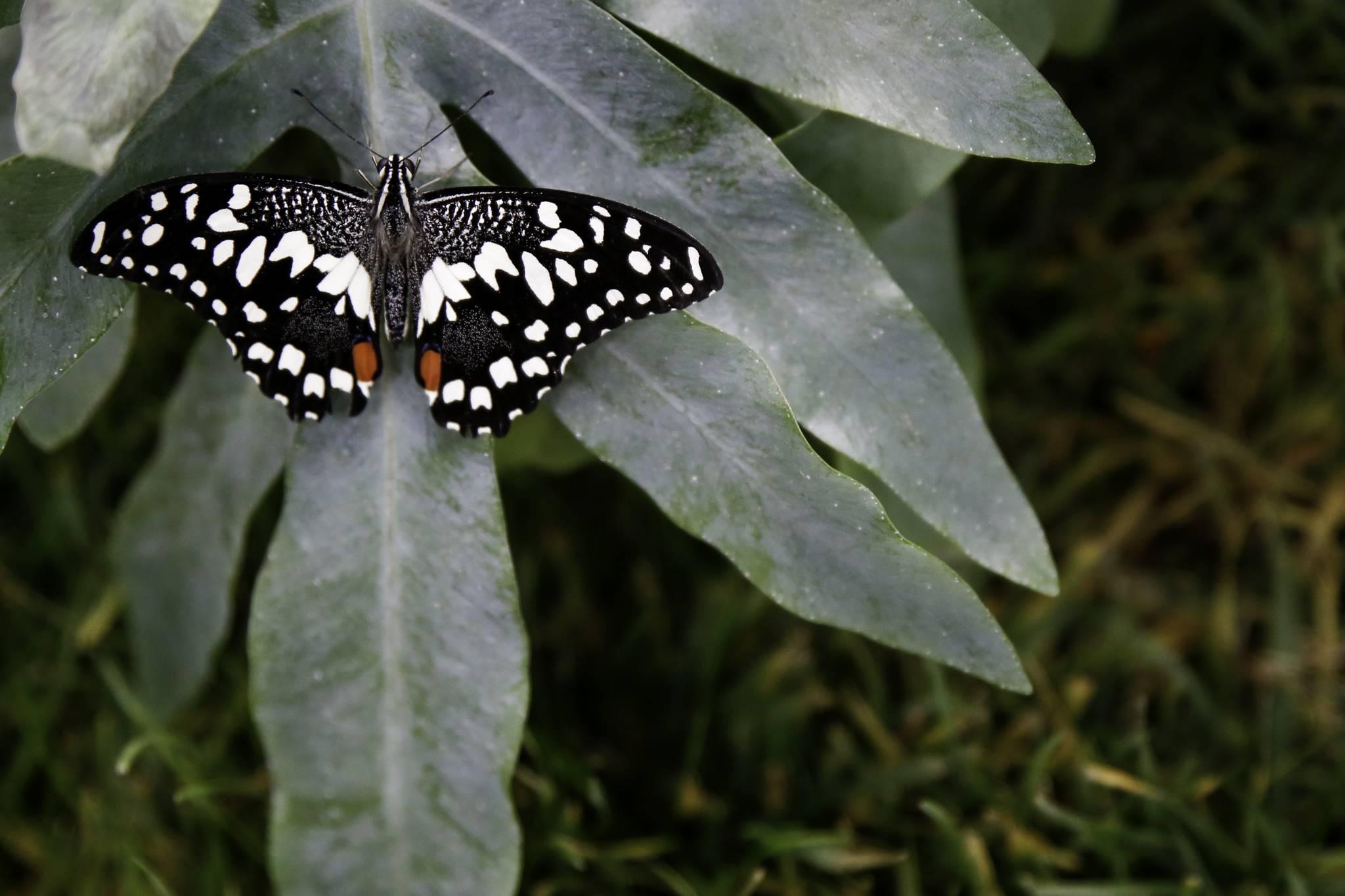 un_te_con_le_farfalle